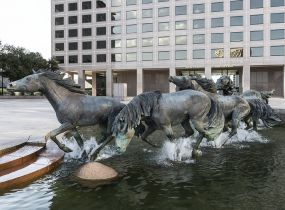 Irving Texas, horses
